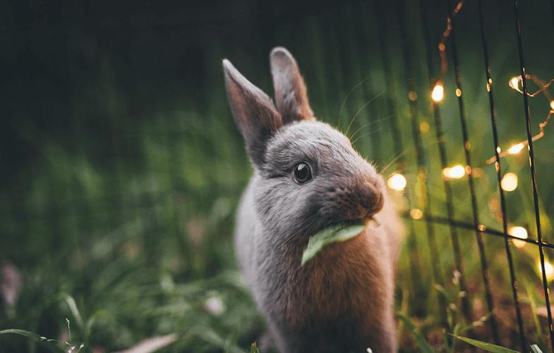 hipnotize olmuş tavşan